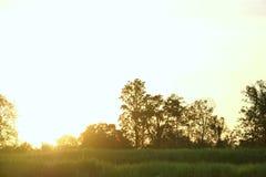 Siluetee el estilo de la vista del sol que va abajo y de los árboles Imágenes de archivo libres de regalías