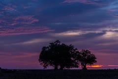 Siluetee el lanzamiento de la opinión del paisaje del árbol en crepúsculo Foto de archivo libre de regalías