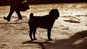 Siluetee el perro peligroso del perro que lucha atado a un correo del árbol perro que lucha del invierno el problema de luchar pe almacen de video