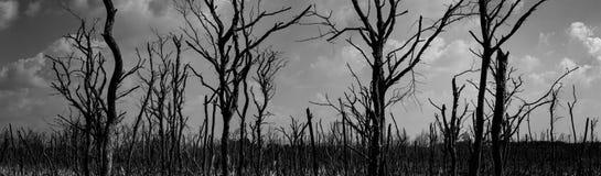 Siluetee el ?rbol muerto en el fondo dram?tico oscuro del cielo para asustadizo o la muerte Noche de Halloween Desesperado, deses fotografía de archivo libre de regalías