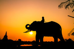 Acción de la silueta del elefante en la provincia de Ayutthaya Fotografía de archivo