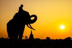 Siluetee la acción del elefante en la provincia de Ayutthaya Fotografía de archivo libre de regalías