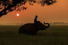 Siluetee la acción del elefante en la provincia de Surin, Tailandia Fotografía de archivo libre de regalías