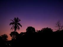 Siluetee la fila del árbol con el cielo anaranjado y púrpura foto de archivo libre de regalías
