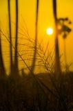 Siluetee la hierba que acerca a la puesta del sol con un cielo de oro Imagen de archivo libre de regalías