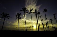 Siluetee la imagen del árbol de coco, de la luz del sol y de la nube dramática imagen de archivo libre de regalías
