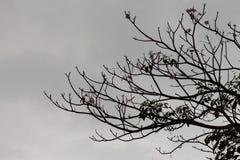 Siluetee la vista de la rama en el árbol antes de lluvia Fotografía de archivo
