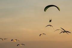 Siluetee Paramotor, paracaídas, vuelo de Paraglide en la puesta del sol Fotos de archivo