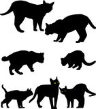 Siluets of cats Stock Images