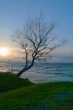 Siluett eines Baums Lizenzfreie Stockbilder
