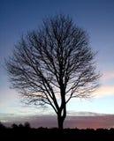Siluetta 1 dell'albero di tramonto fotografie stock libere da diritti