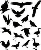 Siluetta 1 (+vector) degli uccelli Fotografia Stock Libera da Diritti