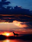 Siluetta 3 del cavallo Fotografie Stock Libere da Diritti