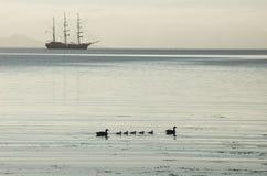 Siluetta alta della nave, anatroccoli, acque calme fotografia stock libera da diritti