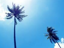Siluetta alta della palma su cielo blu Corona della palma con la foglia verde sul fondo soleggiato del cielo Immagine Stock