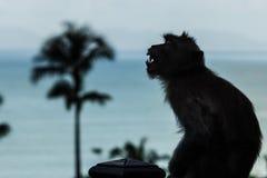 Siluetta arrabbiata della scimmia Fotografie Stock Libere da Diritti
