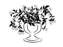 Siluetta in bianco e nero del vaso con le rose Fotografie Stock