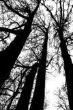 Siluetta in bianco e nero delle teste dell'albero fotografie stock libere da diritti