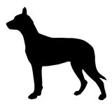 Siluetta in bianco e nero di un cane Puntatore o pinscher Fotografie Stock Libere da Diritti
