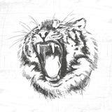 Siluetta capa della tigre - illustrazione di vettore isolata su fondo bianco Fotografie Stock Libere da Diritti
