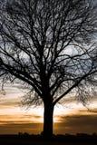 Siluetta da un albero Immagine Stock Libera da Diritti