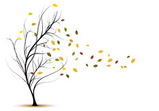 Siluetta decorativa dell'albero di vettore in autunno Immagine Stock