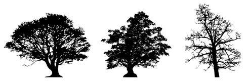 Siluetta degli alberi Fotografia Stock