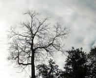 Siluetta degli alberi Fotografie Stock