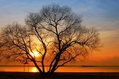 Siluetta degli alberi Immagini Stock Libere da Diritti