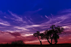 Siluetta degli alberi alla notte Fotografie Stock