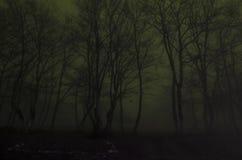 Siluetta degli alberi alla notte, concetto spaventoso di orrore della foresta nebbiosa spettrale Immagine Stock