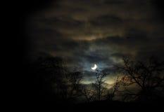 Siluetta degli alberi contro la mezzaluna alla notte Fotografie Stock
