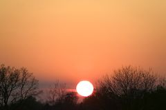 Siluetta degli alberi di tramonto Immagine Stock Libera da Diritti