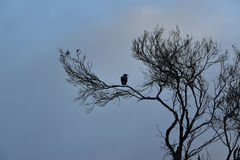 Siluetta degli alberi e dell'uccello Fotografie Stock