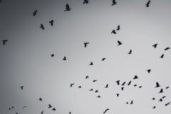 Siluetta degli uccelli di volo Immagini Stock