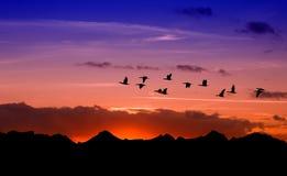 Siluetta degli uccelli di volo sopra il tramonto rosso Immagini Stock