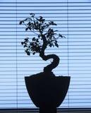 Siluetta dei bonsai Immagine Stock