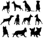 Siluetta dei cani Immagini Stock Libere da Diritti