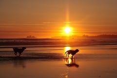 Siluetta dei cani nel tramonto di Long Beach Fotografia Stock
