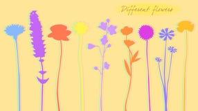 Siluetta dei fiori colorati, vettore royalty illustrazione gratis