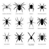 Siluetta dei ragni Immagini Stock