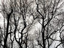 Siluetta dei rami di albero Immagini Stock Libere da Diritti