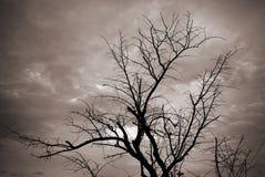 Siluetta dei rami di albero Fotografia Stock