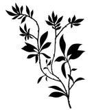 Siluetta dei rami di albero con il lotto delle foglie Fotografia Stock