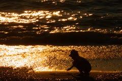 Siluetta del bambino - carta da parati di tramonto: Immagine di riserva Fotografia Stock