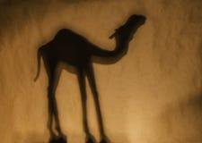 Siluetta del cammello Fotografie Stock
