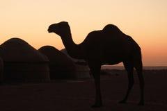 Siluetta del cammello immagine stock