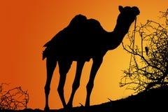 Siluetta del cammello ad alba Fotografie Stock