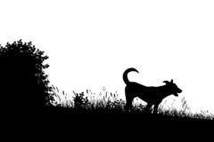 Siluetta del cane del prato Fotografia Stock