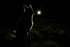Siluetta del cane nei fari fotografia stock libera da diritti